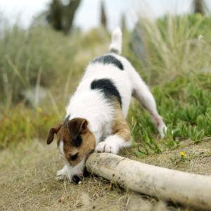 Dieta lekkostrawna dla psa